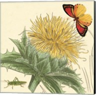 Star Thistle Fine-Art Print