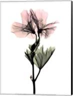 Geranium Fine-Art Print