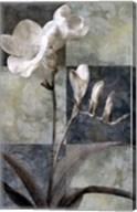 Memento I Fine-Art Print