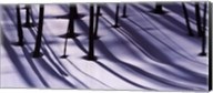 Pine Trees and Morning Shadows Fine-Art Print