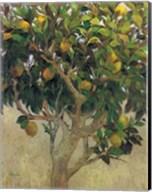 Limonero Fine-Art Print