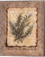 Vintage Herbs - Rosemary Fine-Art Print