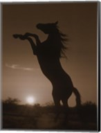 Rearing Horse Silhouette Fine-Art Print