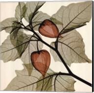 Japanese Lantern (Sm.) Fine-Art Print