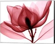 Red Magnolia I (Sm.) Fine-Art Print