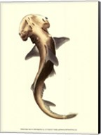 Shark Tale II Fine-Art Print