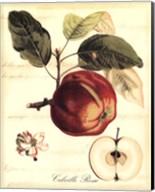 Custom Tuscan Fruits I (AO) Fine-Art Print