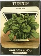 Turnip Fine-Art Print