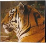 A True Phillies Fan - Philadelphia Zoo Fine-Art Print