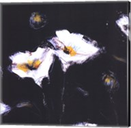 Preening Poppies Fine-Art Print