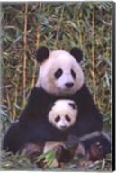 Panda And Baby Wall Poster