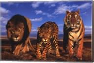 Three Cats Wall Poster