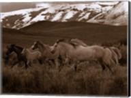 Horses Running I Fine-Art Print