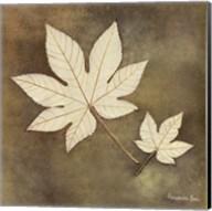 Maple Leaf Fine-Art Print