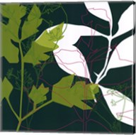 Green Leaf Shadow Fine-Art Print