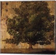 Aged Tree I Fine-Art Print