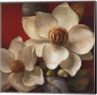 Magnolia Passion II Fine-Art Print