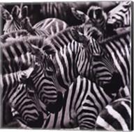Camouflage II Fine-Art Print