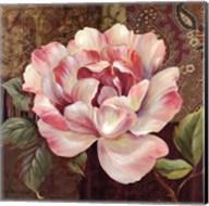 Esperance Rose - mini Fine-Art Print