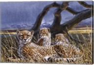 Cheetah and Cubs Fine-Art Print