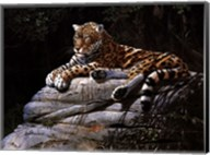 Jaguar on Rock Fine-Art Print