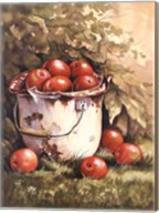 Pail of Apples Fine-Art Print