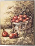 Barrel Apples Fine-Art Print