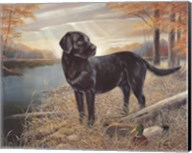 Black Lab with Decoys Fine-Art Print