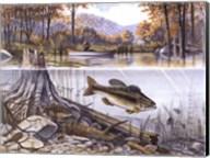 Trout Underwater Fine-Art Print