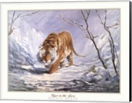 Tiger In The Snow Fine-Art Print