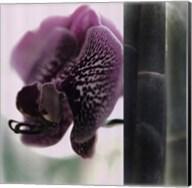Bamboo II (Flower II) Fine-Art Print
