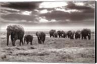 Amboseli Elephants Fine-Art Print