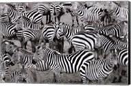 Zebras Abstraction Fine-Art Print