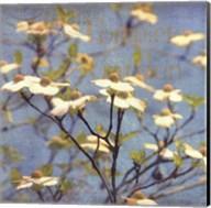 Dogwood I - mini Fine-Art Print