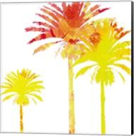 Sunny Palm I Fine-Art Print