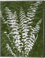 Jewel Ferns I Fine-Art Print
