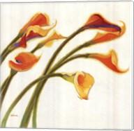 Callas in the Wind I Fine-Art Print