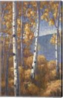 Aspen Forest I Fine-Art Print