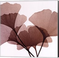 Ginko Leaves I Fine-Art Print