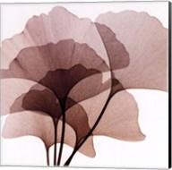 Ginko Leaves II Fine-Art Print