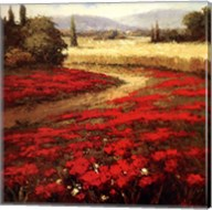 Red Poppy Trail Fine-Art Print