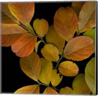 Small Vivid Leaves I Fine-Art Print