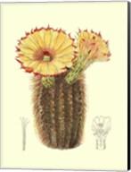 Flowering Cactus I Fine-Art Print