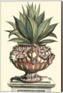 Antique Munting Aloe IV Fine-Art Print