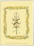 Small Peppermint Fine-Art Print