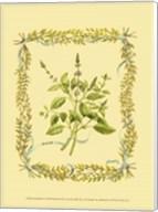 Small Basil Fine-Art Print