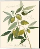 Ascolane Olives Fine-Art Print