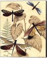 Sm. Graphic Dragonflies II (P) Fine-Art Print