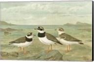 Shore Gathering IV Fine-Art Print