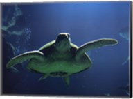 Aegean Sea Turtles II Fine-Art Print